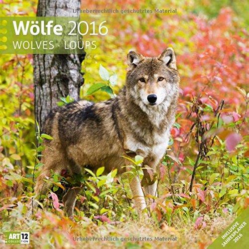 Wölfe 30 x 30 cm 2016