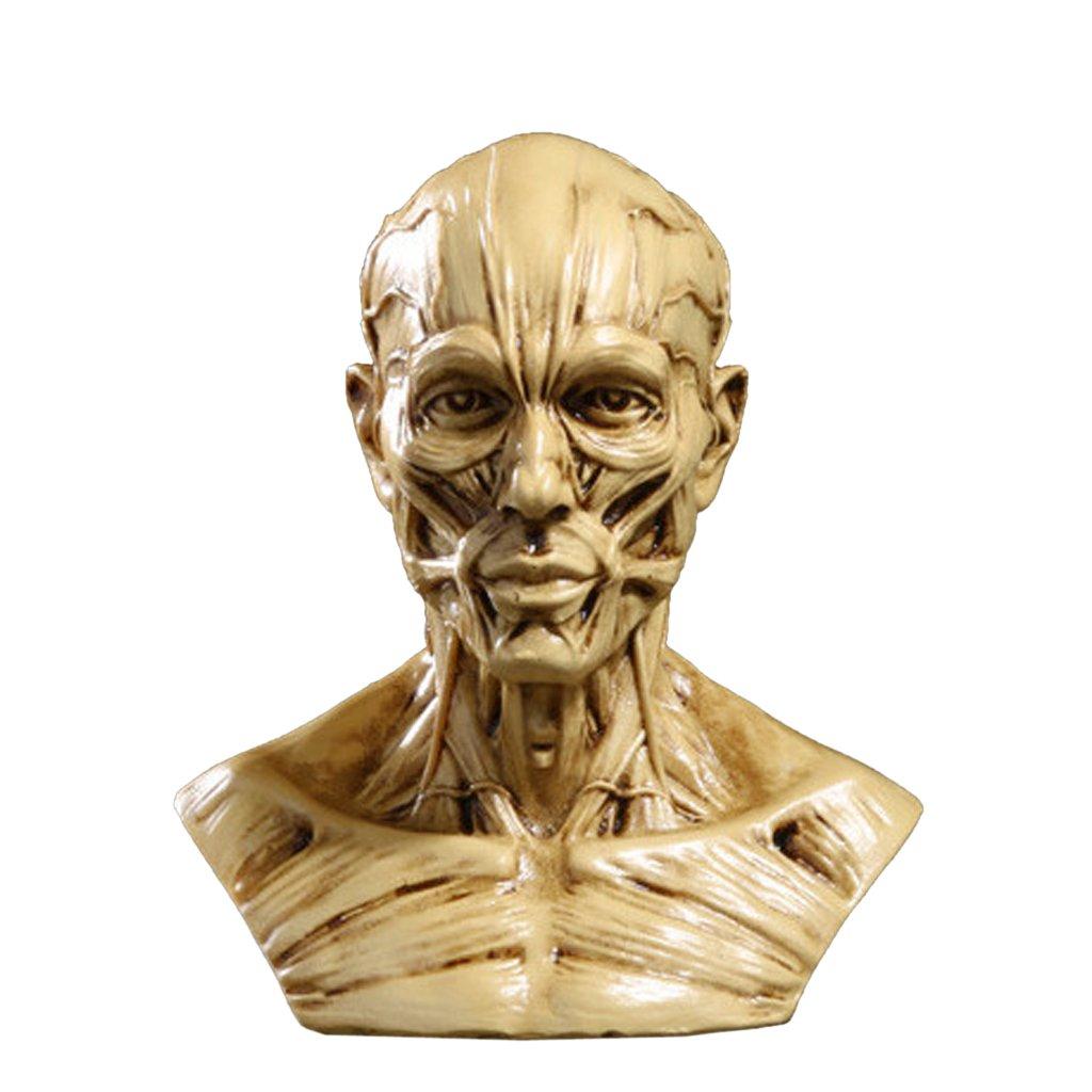 4'' Statua Busto Uomo In Resina Anatomia Muscolo Medico Artista Addobbi Casa Studio - Giallo Generico USB14019141