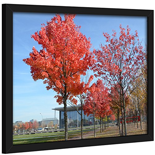 12x16 Inch Picture Frame Poster Frame For Pictures 12x16 without Mat or With Mat(not included) for smaller size-Safety high transparent PC sheet NON GLASS Wall Mounting pin-hook not inclu (1216 Black)