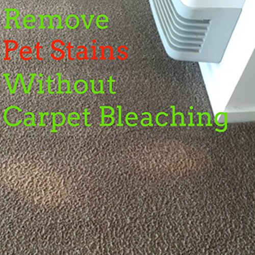 Dog Urine Stains On Carpet To Remove: Pet Stain Remover Odor Eliminator Puppy Training