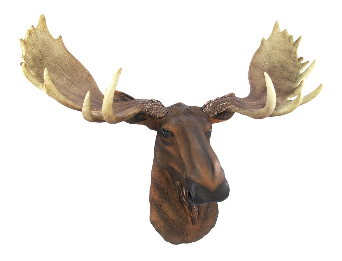 Private Label North American Moose Head Bust Wall Hanging by Private Label