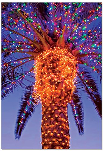 Palm Tree Holiday Card - B3273DXSG Box Set of 12 Holiday Palms Christmas Card Featuring a Palm Tree Festively Lit for The Season; with Envelopes