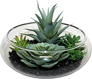 "Worth Imports Dish Garden Stones in 7"" Glass Container Succulent, Green, Black, Clear"