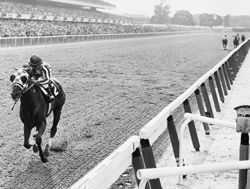 Secretariat Wins At Belmont Poster Art Photo Great American Horses Posters Photos Artwork 11x14 (Secretariat Wins)