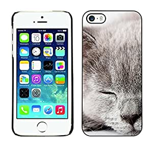 Be Good Phone Accessory // Dura Cáscara cubierta Protectora Caso Carcasa Funda de Protección para Apple Iphone 5 / 5S // Grey Scottish Fold British Shorthair Cat