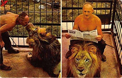 Ephrata Pennsylvania Sweigarts Wild Animal Zoo lion vintage pc Z23090