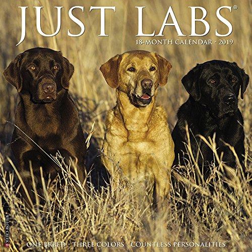 (Just Labs 2019 Wall Calendar (Dog Breed Calendar))