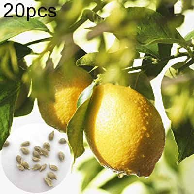 20Pcs Lemon Tree Fruit Seeds Ornamental Plant Garden Yard Farm Bonsai Decoration - Lemon Tree Seeds : Garden & Outdoor