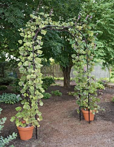 - Titan Arch, Large Lightweight Metal Backyard Garden Arch for Climbing Plants