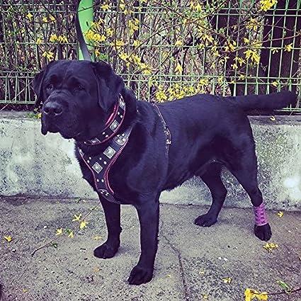 Bestia EROS - Arnés de piel para perros para razas grandes. 100 ...