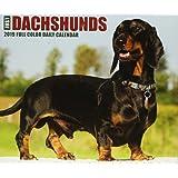 Just Dachshunds 2019 Box Calendar (Dog Breed Calendar)