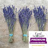 Findlavender - Royal Velvet Lavender Bundles - 10'' - 14'' Long - Can Be Used for Any Ocassion - Perfect for your wedding! From The Latest Harvest - 5 Bundles