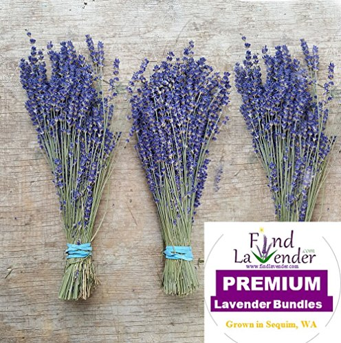 Findlavender - Royal Velvet Lavender Bundles - 10'' - 14'' Long - Can Be Used for Any Ocassion - Perfect for your wedding! From The Latest Harvest - 5 Bundles by Findlavender