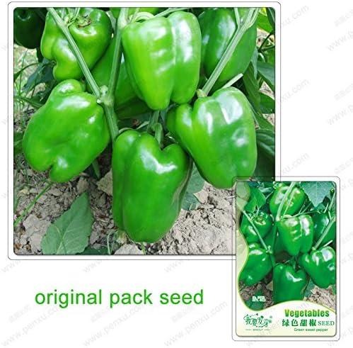 40 semillas / pack, semillas de pimiento verde, chile balcón en maceta de verduras, semillas de pimentón: Amazon.es: Jardín