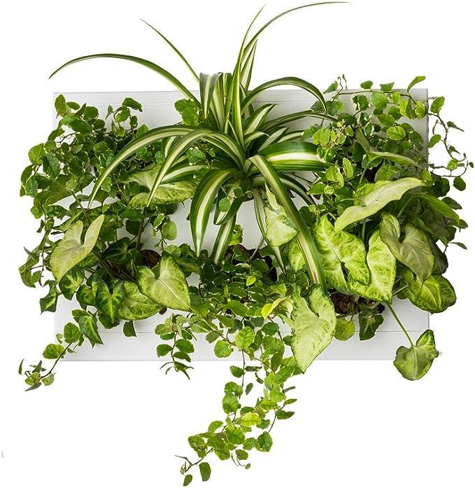 Ortisgreen Hang Oasi Home Indoor Vertical Garden Contains 1 White Planter Unit Design Your Own Living Wall With Vertical Gardening Planters Use Indoors Holds 6 Plants Garden Outdoor