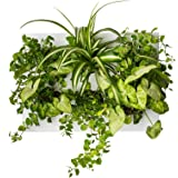 Ortisgreen Hang.Oasi.Home - Indoor Vertical Garden, Contains 1 White Planter Unit, Design Your Own Living Wall With Vertical