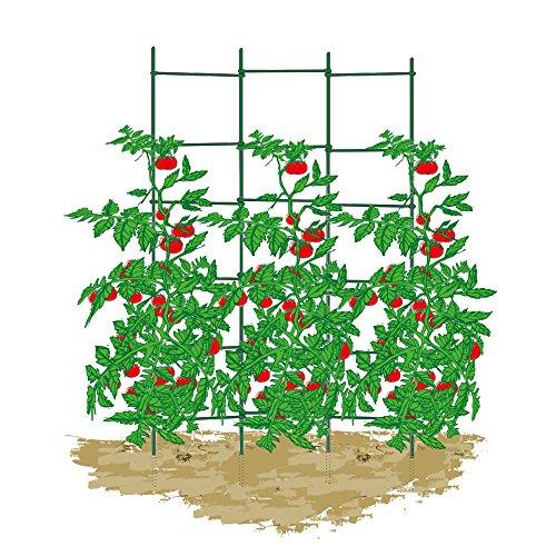 EcoStake, 8-Feet, 50 Pack, 1/2-Inch Dia, Ecofriendly Garden Stakes, Plant Stakes, Tree Stakes, Tomato Stakes, Fiberglass Stakes, Landscape Stakes, Green by EcoStake (Image #5)