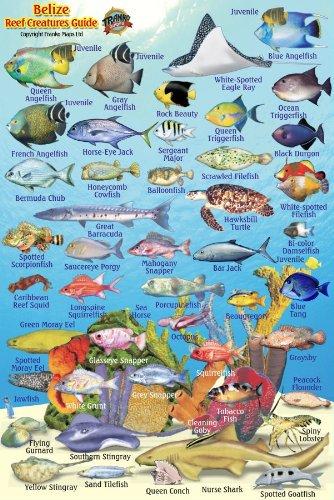 "Belize Reef Creatures Guide Franko Maps Laminated Fish Card 4"" x 6"" pdf epub"