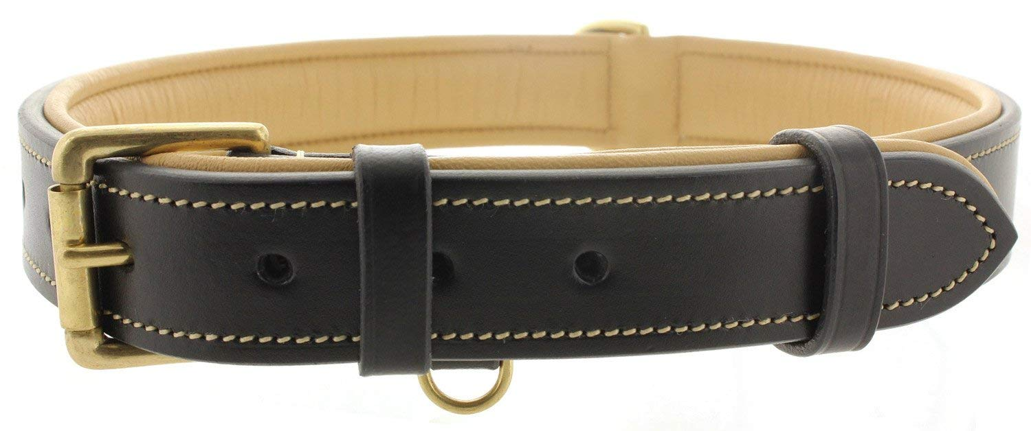 Leather Padded Dog Collar Made of Genuine Kingston Luxury Leather