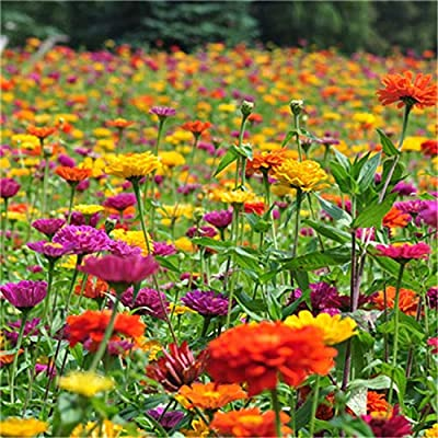 Earth Seeds Co 220 Pcs Colourful Annual Mix Flower Seeds Wildflower Drought Tolerant Wildflower Seeds Beneficial for Many pollinators, : Garden & Outdoor