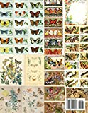 Butterfly Ephemera Collection: 18 sheets - 9