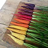 Suttons - Carrot Seeds - Rainbow Mix