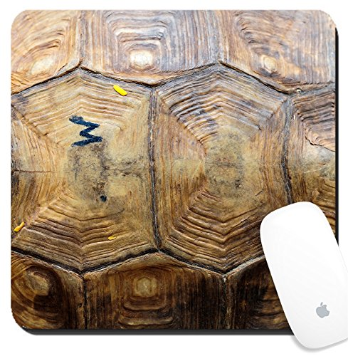 Luxlady Suqare Mousepad 8x8 Inch Mouse Pads/Mat design IMAGE ID: 34313168 tortoise - Shell Tortoise Images