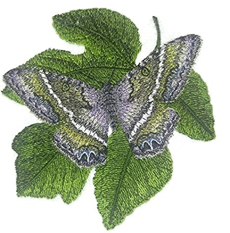 Personalizado y único increíble mariposas coloridas [bruja negro mariposa nocturna de llew mejia] hierro
