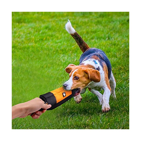 Raffaelo Dog Treat Bag Dog Training Bag Pouch Dog Food Storage for Puppy Dog Training and Outdoors Activities – (Orange… Click on image for further info. 2