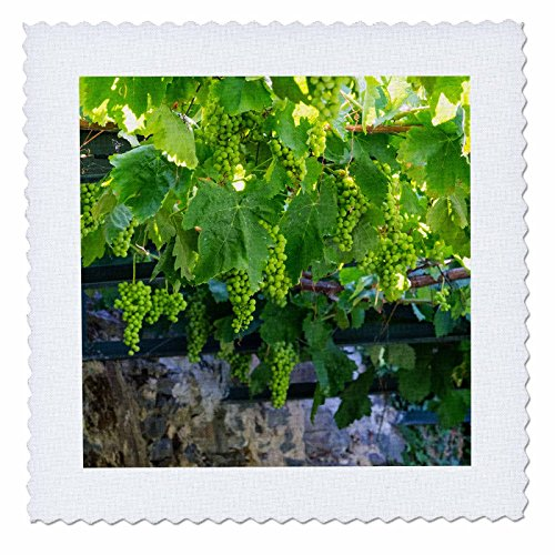 3dRose Portugal, Douro Valley, Grapes at A Vineyard. Quilt Square 12 x ()