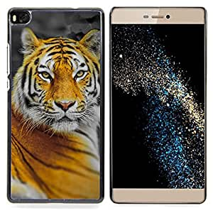 Queen Pattern - FOR HUAWEI P8 - Tiger Big Cat Jungle Nature Orange Yellow - Cubierta del caso de impacto con el patr???¡¯???€????€?????n Ar
