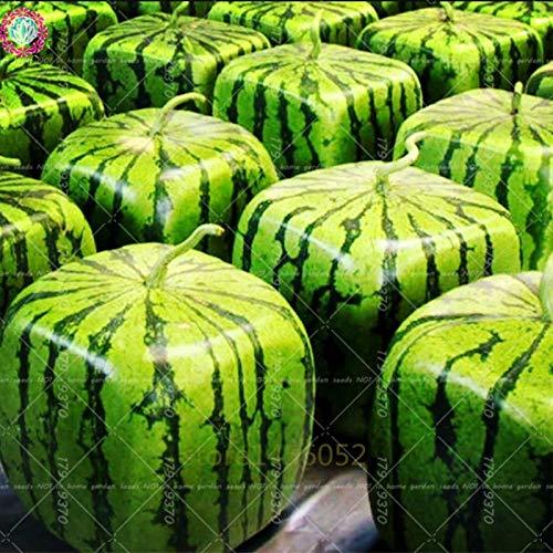 Jardinage 30pcs 3 Melon Black deau Graines Pinkdose Y29HWEDI