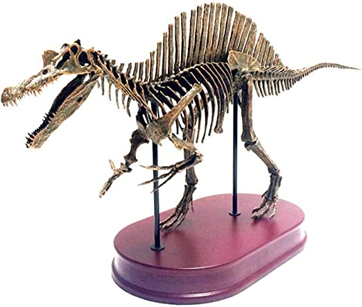 un velocirraptor nuevo braquiosaurio Spinosaurus 3 x dinosaurios en miniatura-esqueleto