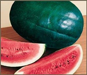 Watermelon, Black Diamond Watermelon seed, Organic, NON-GMO, 25 seeds per package