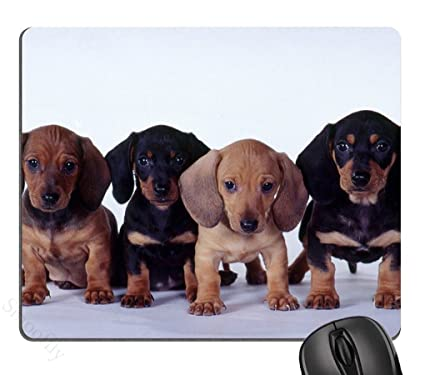 Rock Bull dachshund puppies Mouse Pad, Mousepad (Dogs Mouse