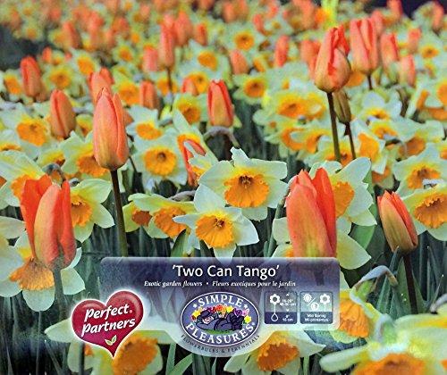 Two Can Tango Bulb Collection -16 Assorted Bulbs - Daffodils & Tulips