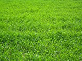 Nature's Seed TURF-LOPE-500-F Perennial Ryegrass