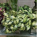 FYYDNZA-Star-Grass-Green-Plastic-Plants-Grass-Artificial-Grass-Artificial-Flowers-Plastic-Flowers