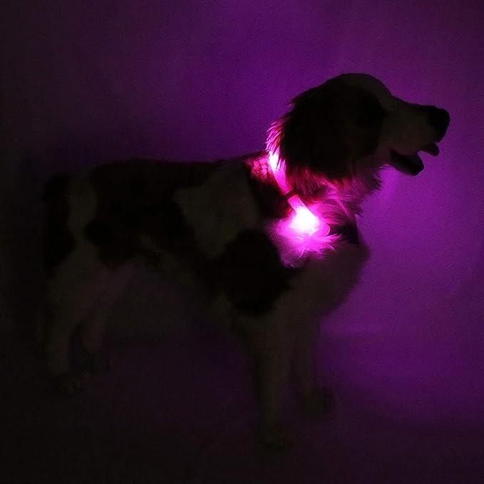 Leuchtie Leuchthalsband Plus Hotpink Größe 45 I Led Halsband Für Hunde I 100 H Leuchtdauer I Wasserdicht I Enorm Hell Haustier