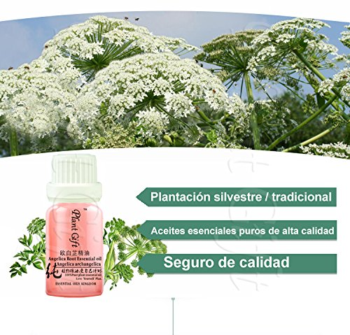 Amazon.com : Plant Gift Angelica root Oil - 100% Pure Angelica Essential Oil - Boost Immune System and Strength - Premium Quality -Best For Aromatherapy 10 ...