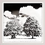 Twin Trees In High Key-HARTRE84825 Print 20''x20'' by Harold Silverman - Trees & Old Fences in a Affordable White Medium