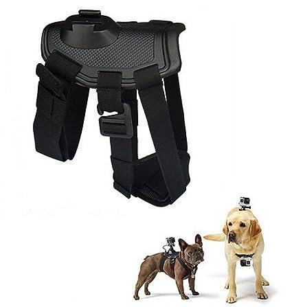 Meihuida cámara deportiva Fixator para perros Medianas: Amazon.es ...