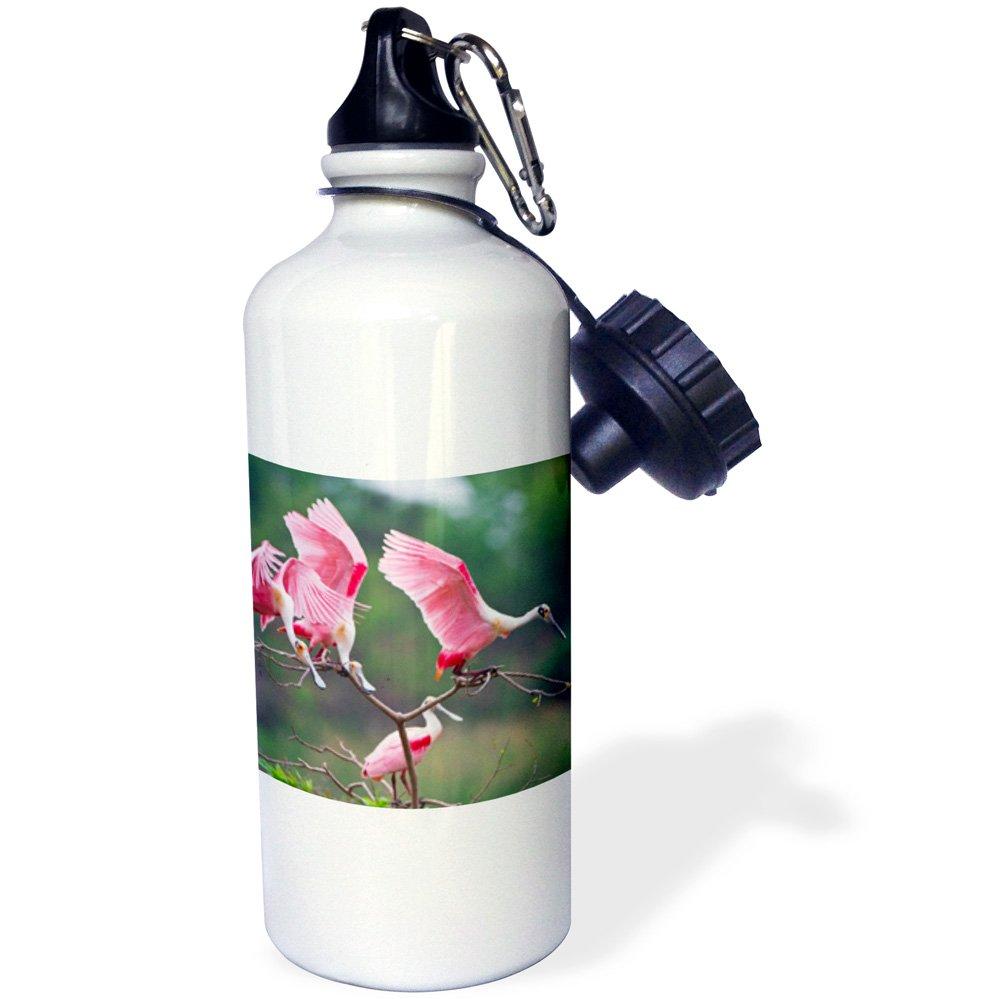 -Sports Water Bottle 21oz wb/_191316/_1 3dRose Roseate Spoonbills Landing in Near nests 21 oz Multicolored Ajaia ajaja