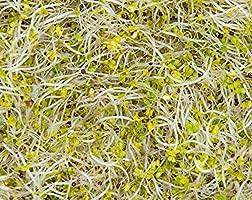 Semillas Broccoli convencionales y orgánicas: Amazon.com ...