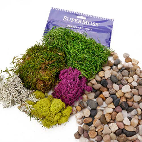 Ellie Arts | Preserved SuperMoss for Fairy Gardens, Terrariums. Fresh Spanish, Green with other Hues and Colors, Reindeer, Chartreuse Mix Bundled with Natural River Rocks, Pebbles, Decorative Stones.
