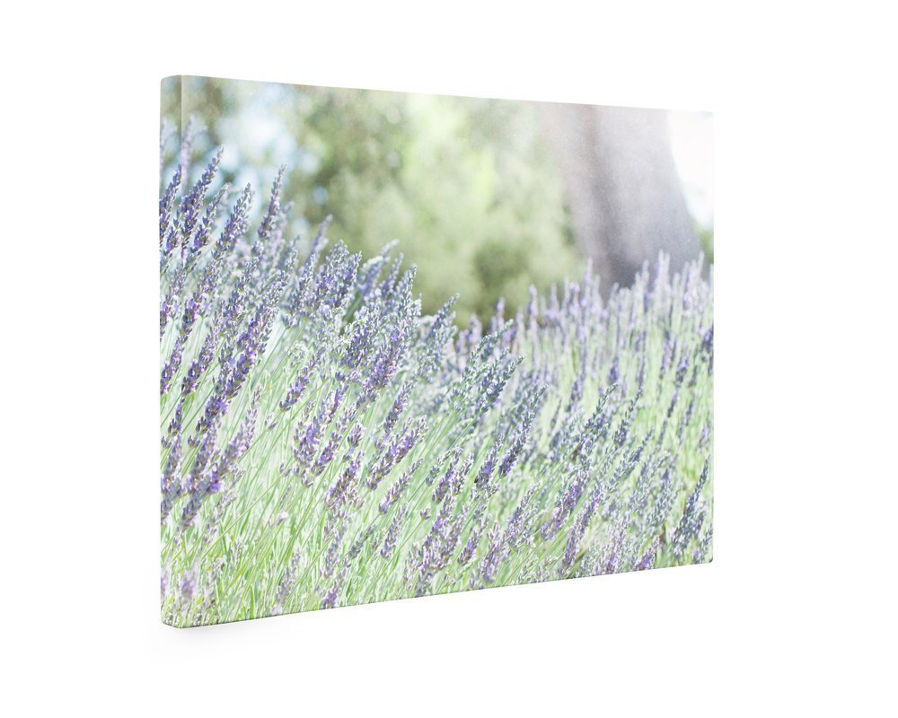 Large Format Print, Canvas or Unframed, Rustic Wall Art Flowers, Purple Floral Lavender Decor, Farmhouse Country Cottage Picture, Wild Botanical Photography, 'Fields of Lavender'