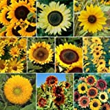 Sunny Sun Power Sunflower Mix, 10 Species, 2 oz seed