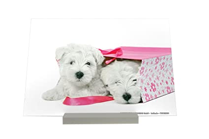 Soporte impresión del arte Fotografias Perro Bolsa de perrito Terrier Letrero Decoración