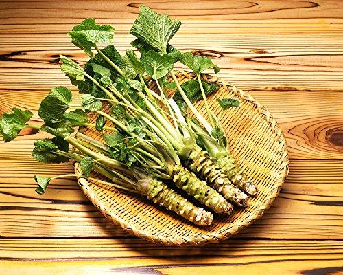Japanese Horseradish - 6