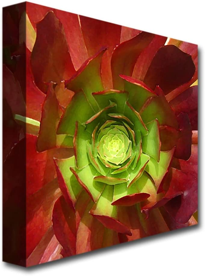 Amazon Com Succulent Square I By Amy Vangsgard 24x24 Inch Canvas Wall Art Prints Posters Prints